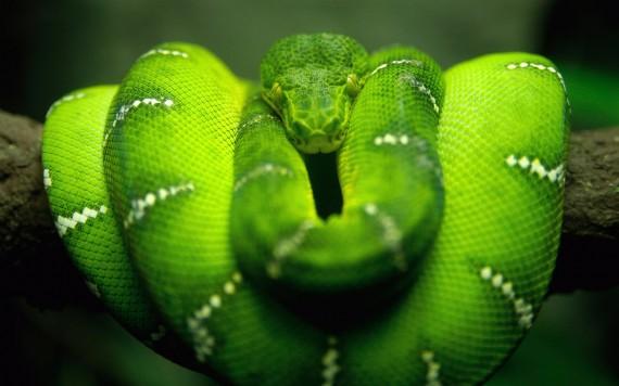 que significa soñar con serpientes