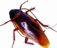Que Significa Soñar con Cucarachas?
