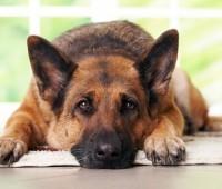 Que Significa Soñar con Perros?
