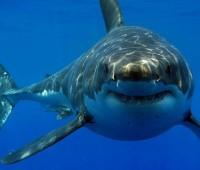 Que Significa Soñar con Tiburones?