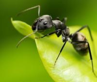 Que Significa Soñar con Hormigas?