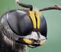 Que Significa Soñar con Insectos?