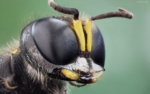 Que Significa Soñar con Insectos