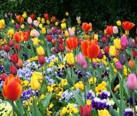 Que Significa Soñar con Flores?
