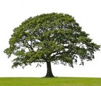 Que Significa Soñar que Estoy Arriba de un Árbol?