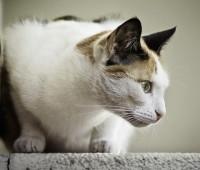 Que Significa Soñar con Gatos que atacan?