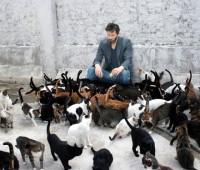 Que Significa Soñar con muchos Gatos?
