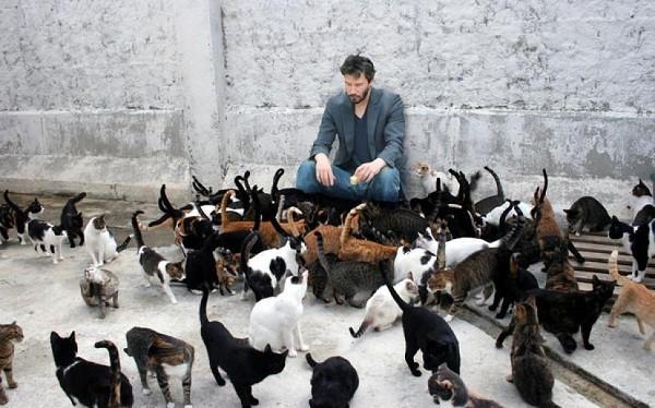 que significa soñar con muchos gatos