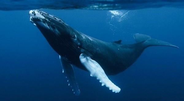 que significa soñar con ballenas